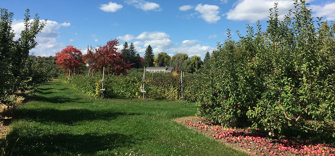 Photo of scenic Meadowbrook Orchards in early fall.